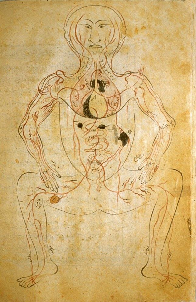 Anatomy by Mansur, a 14th century Persian physician